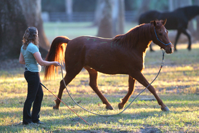 groundwork to improve horsemanship skills
